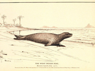 Evolutionary distinctiveness of extant monk seals in light of their extinct relative
