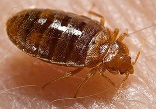 Wall Street Journal piece on bedbugs and cockroaches