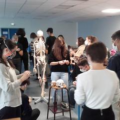 dn2-anatomie-modelage-crane.jpg