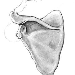 claragarrofe-omoplate1.jpg