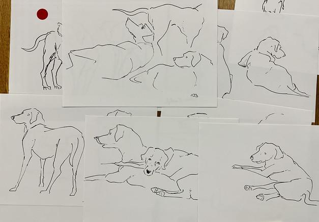 Modèle vivant canin