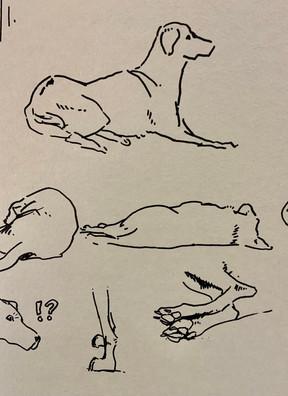 Modèle vivant-chien-poses courtes