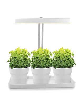 Foto Mini-Garten mit LED-Beleuchtung.jpg
