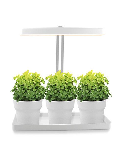 Mini Garten für Zimmerpflanzen