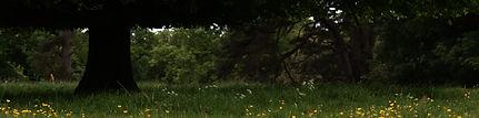 Charlotte Broady Woodland.jpg