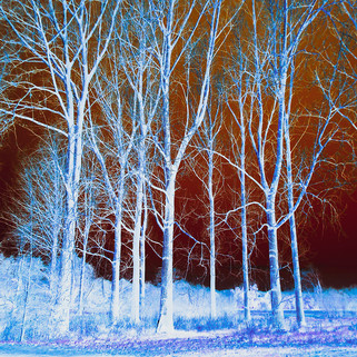 Charlotte Broady Mystery trees