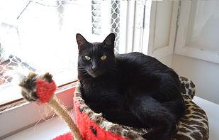 Gato dengoso