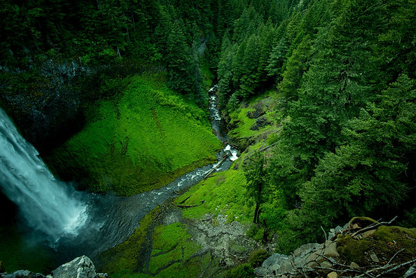 tree-nature-forest-waterfall-wilderness-