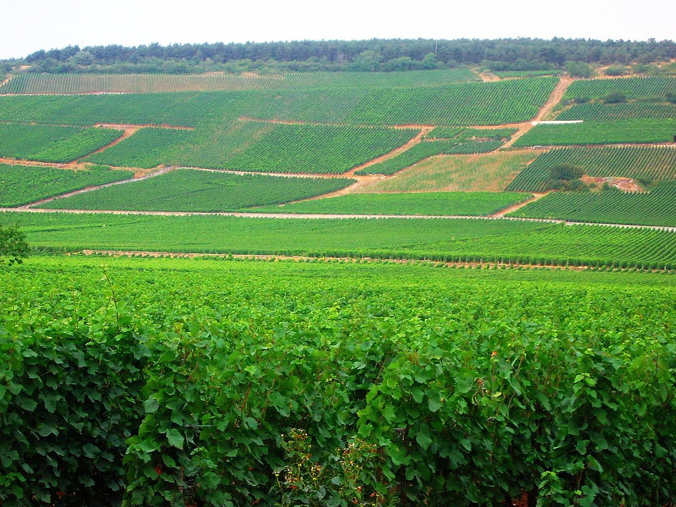 1280px-Vineyards_vosne-Romanée2.jpg