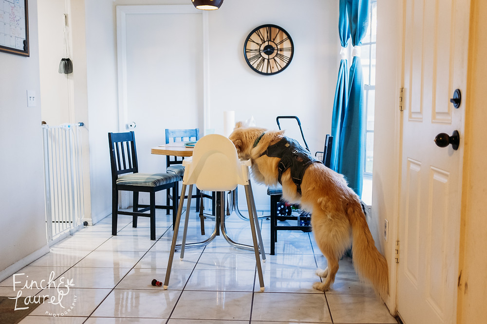 A dog eats leftovers off of the toddler's high chair during a documentary family photography session in Jacksonville, Florida.