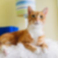 Oliver the orange tabby cat smiles at the camera at his home in Jacksonville, Florida.