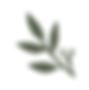 Leaf pine green.png