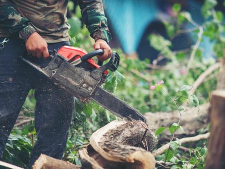 Como descartar os resíduos das podas das árvores corretamente