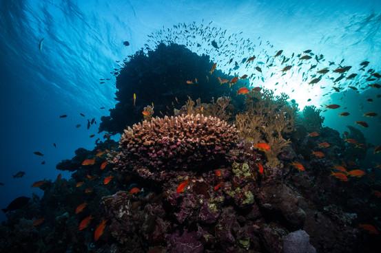 Marsa Alam reef