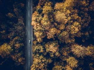 Droning in fall