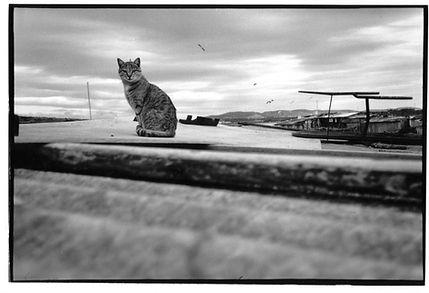 chat photographie Aït Benalla