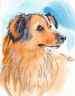 Pro bono / Animal Care Austria