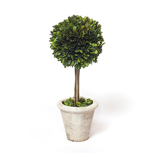 Boxwood Topiary 2