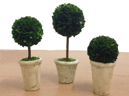 copy of Preserved Boxwood Topiaries - Set of 3