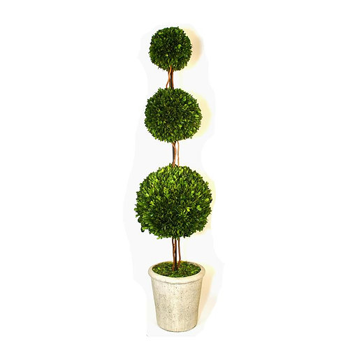 Preserved  Boxwood Topiary - Triple Ball - 59 inch