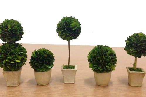 Preserved Boxwood Topiaries - Set of 5