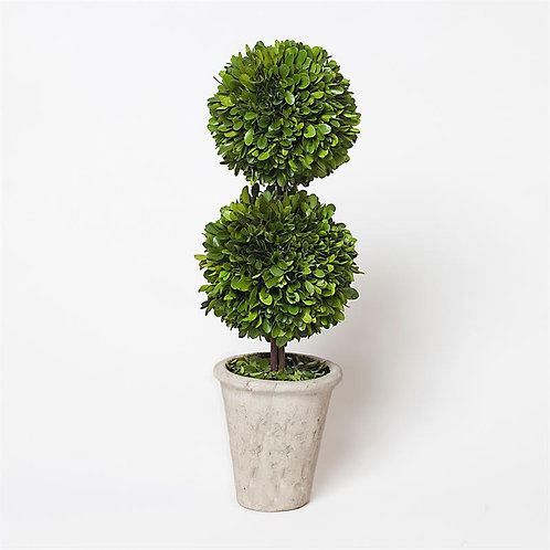 Preserved Boxwood Topiary - Double Ball - 20""