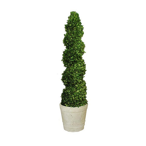 Preserved Boxwood Spiral Topiary - 51 inches