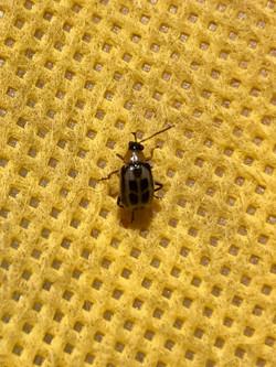 Phoenix Pest Control Pest Removal