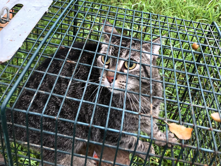 How I Found My Lost Cat: 10 Steps to Help You Retrieve Your Indoor-Only Kitty