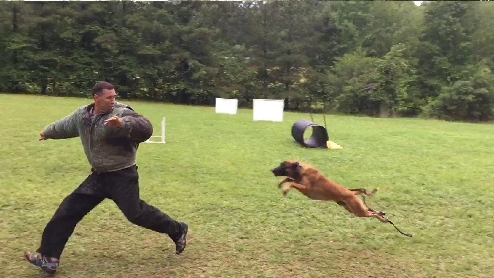 Buscador de oro de perro guardián de opciones binarias