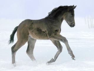 Baby- Pailola im Schnee