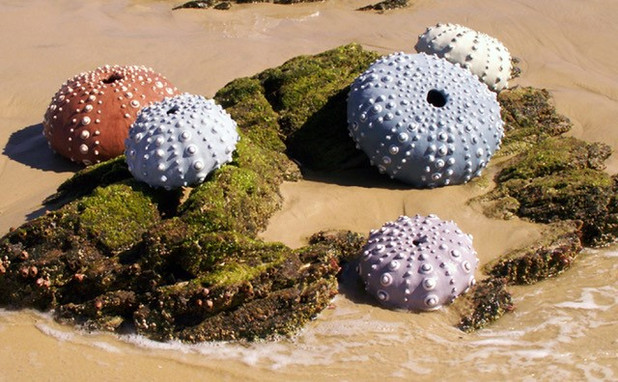Remains Ashore
