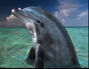 service_dolphin.jpg
