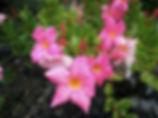 flower_sup.jpg
