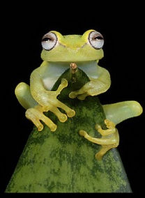 service_frog.jpg