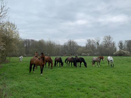 Les chevaux et poneys du CÉA profitent des prés