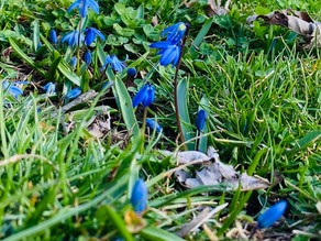 Siberian Squill or: How I Learned to Stop Worrying and Love the Bomb