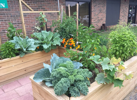 Our New Vegetable Garden