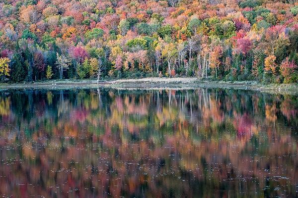 Belvidere Pond.jpg