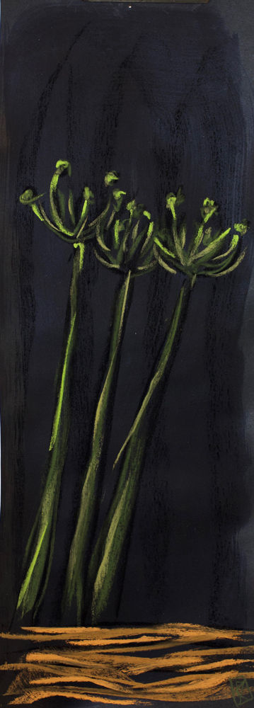 bernice davies, artist, drawing, clivia, clivias, contemporary still-life, flora, floral, still life, clivia stems, flowers, soft pastels, black paper, acrylic paint
