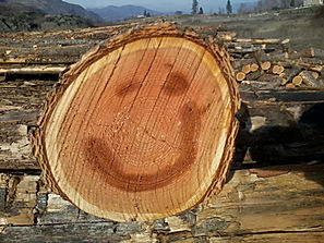busy beavers firewood is happy wood