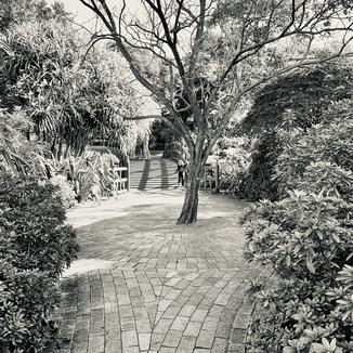 26 June 2021 - Botanic Gardens Residency