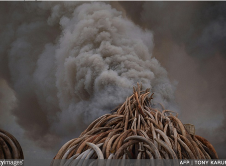 Confronting Vietnam's Wildlife Black Market