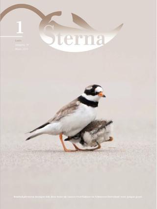 Sterna 2013 nr 1