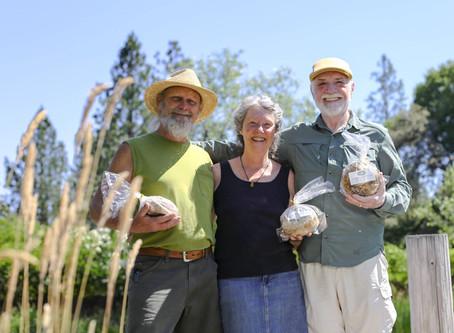 Reasons to Eat Sourdough Bread