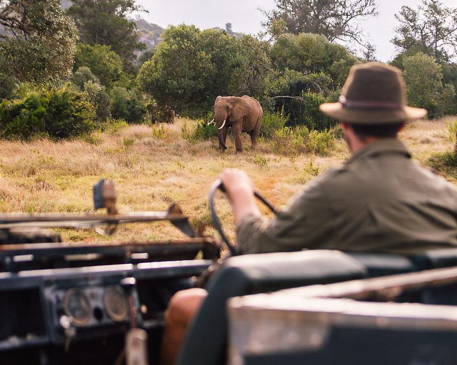 Safari Series-185.jpg