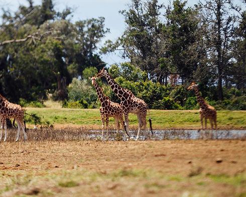Safari Series-113.jpg