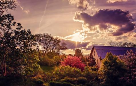 Lilac Pink Sunset.jpg