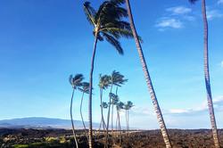 HawaiiCon 2017 Big Island of Hawaii_800