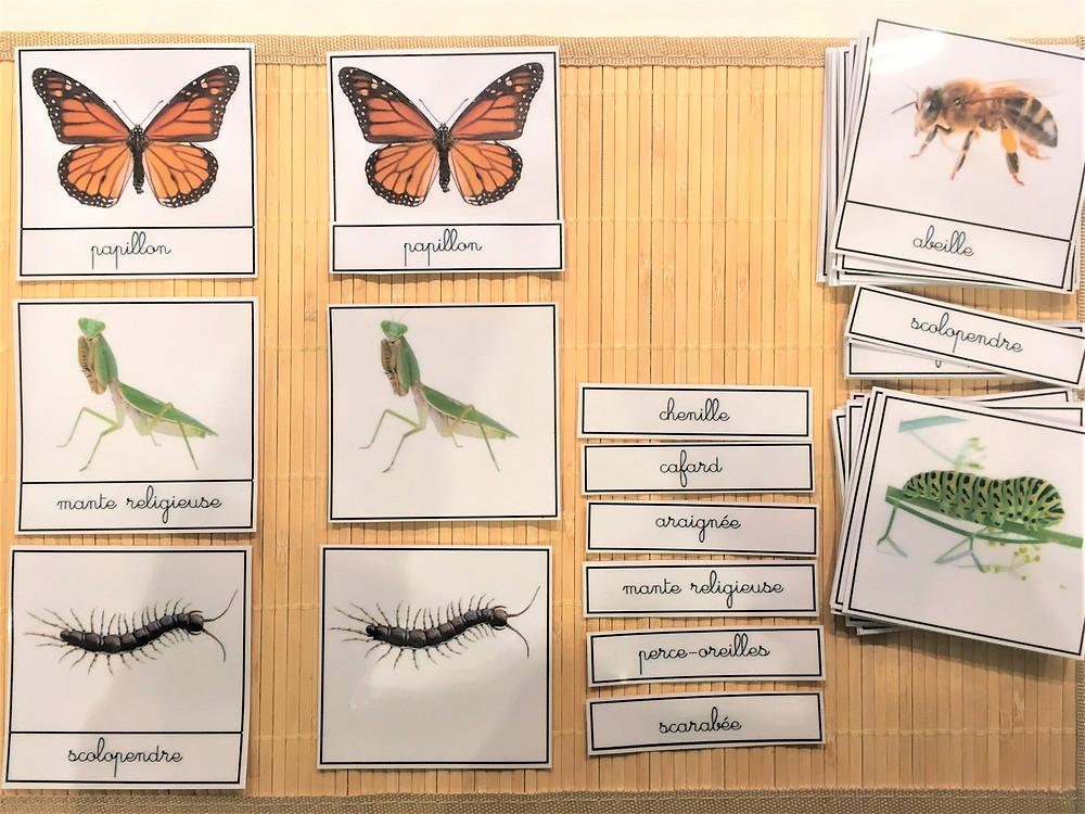 DIY Atelier Montessori : le Monde des Insectes